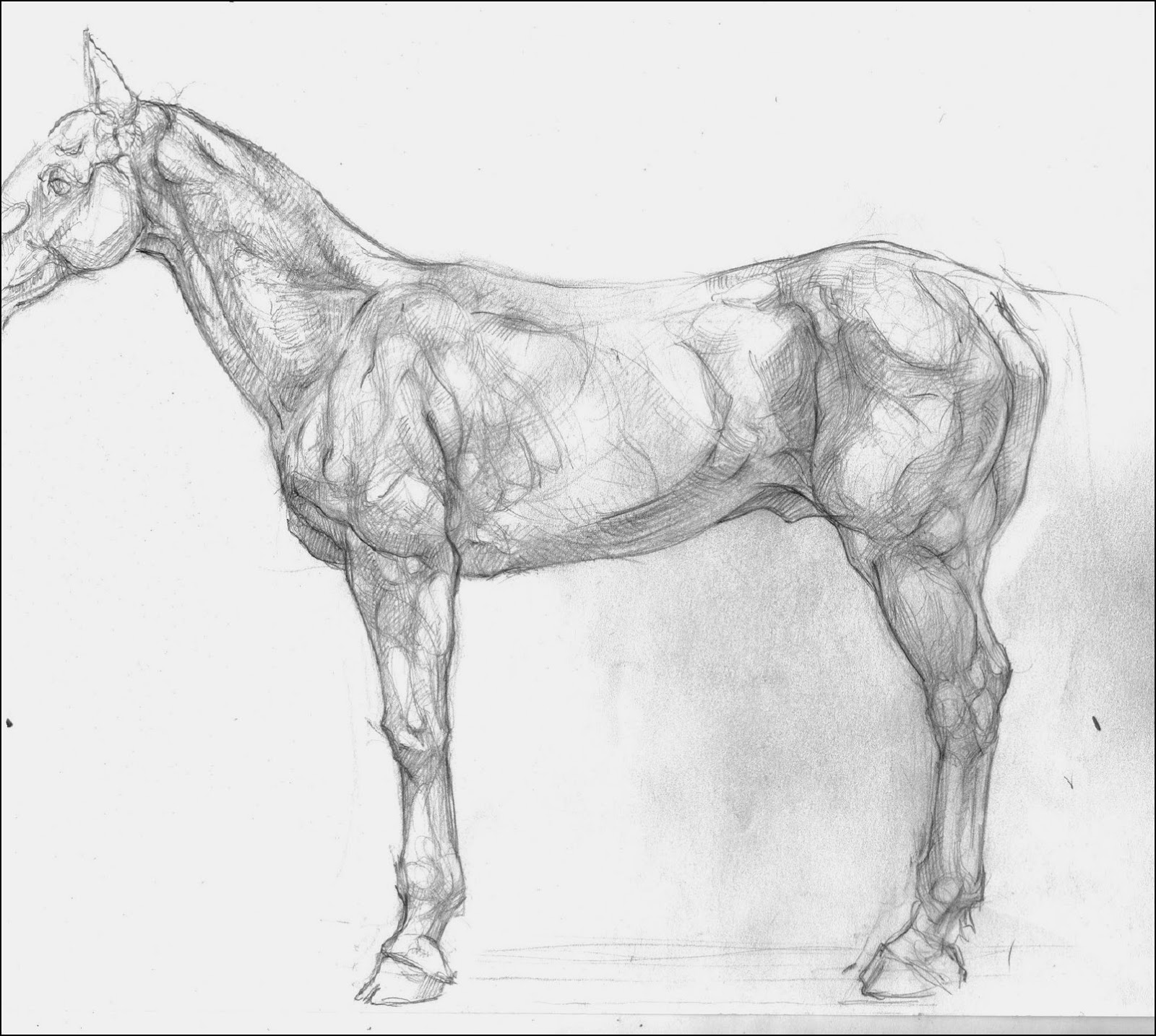 Garret\'s Drawing A Day Blog: Horse Anatomy