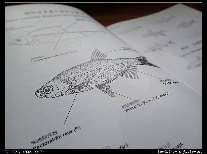 aFishcionado: 《好書推薦系列》之 ── 臺灣淡水魚類原色圖鑑 【第壹卷 鯉形目】