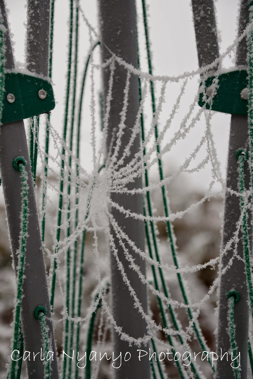 frosty spider web 2