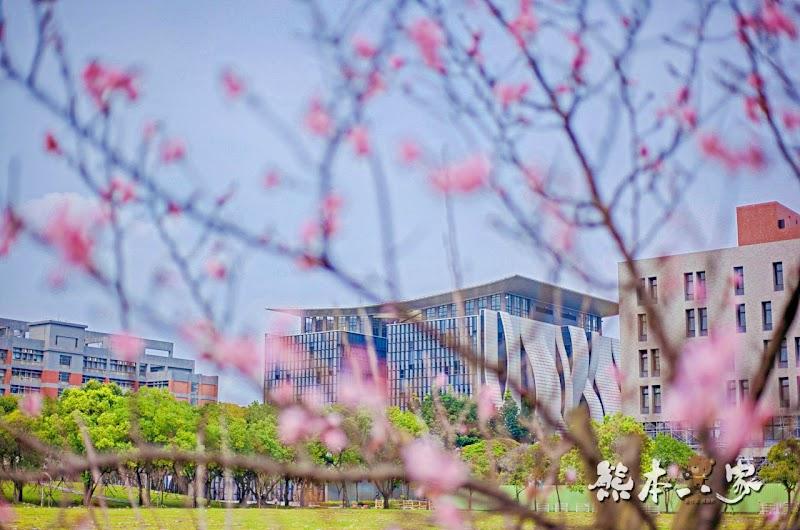 心湖櫻緣|三峽台北大學「心湖櫻花步道」-杜鵑、吉野櫻、木棉花齊綻放