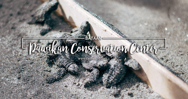 pawikan conservation center guide