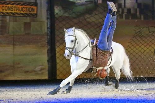anhalten lernen pferd