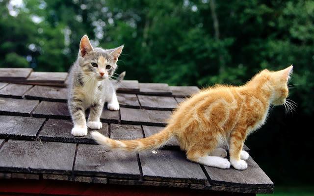 Twee katten op het dak