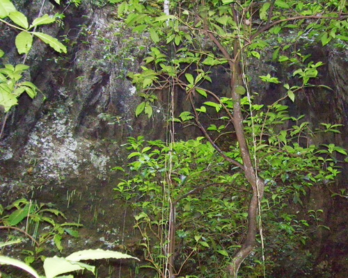 Tinuku.com Travel Jomblang cave in Gunung Kidul karst bring heaven light and perpetuate ancient forest in bottom earth