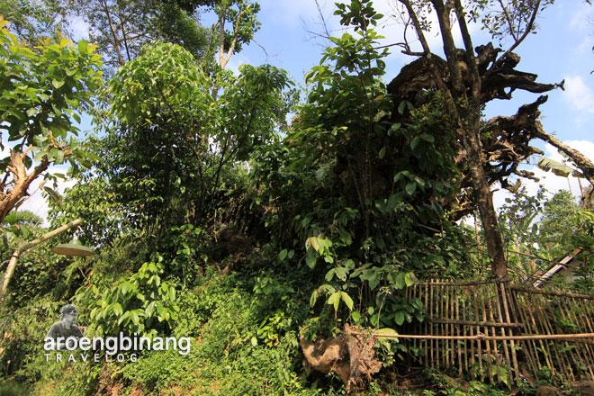 kayu jlamprang wonobodro batang