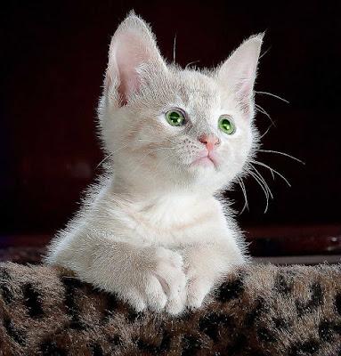 imagenes de gatos, imagen de gatos, fotos de gatos