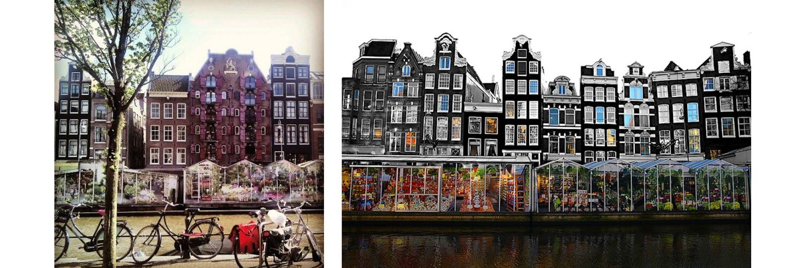 Bien-aimé Voyages Livresques | Amsterdam | Nos étoiles contraires | Mydeerbooks SL88