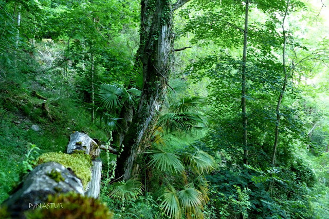 Área Forestal de La Malva - Asturias