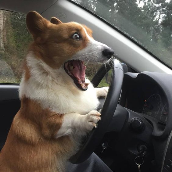Tips for Driving with your Pets