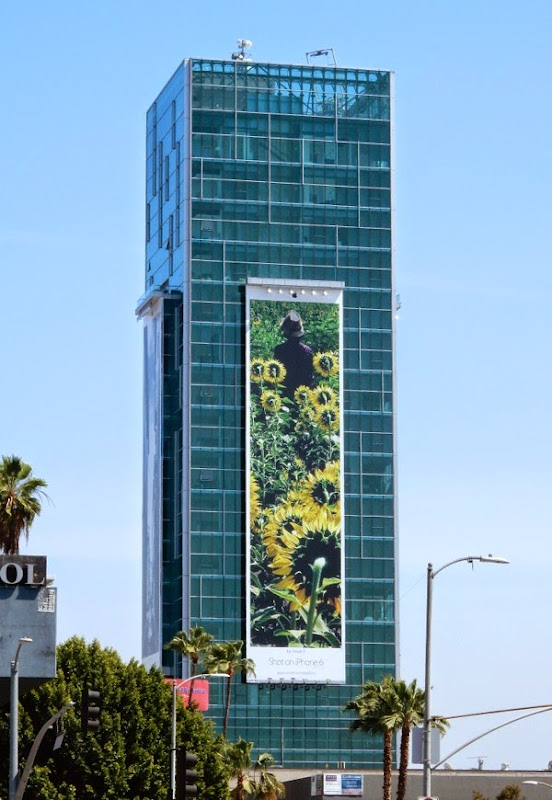 Giant Shot on iPhone 6 sunflowers billboard