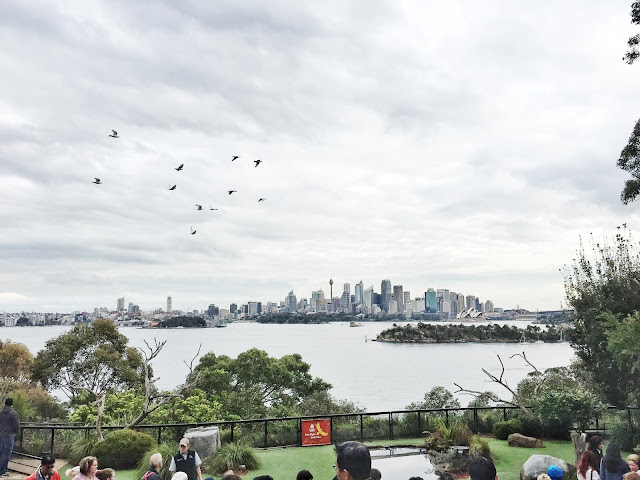 Taronga Zoo - Free-Flight Bird Show