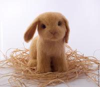 coniglio con lana cardata