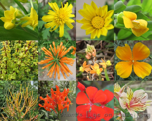Yellow, orange and red flowers in March