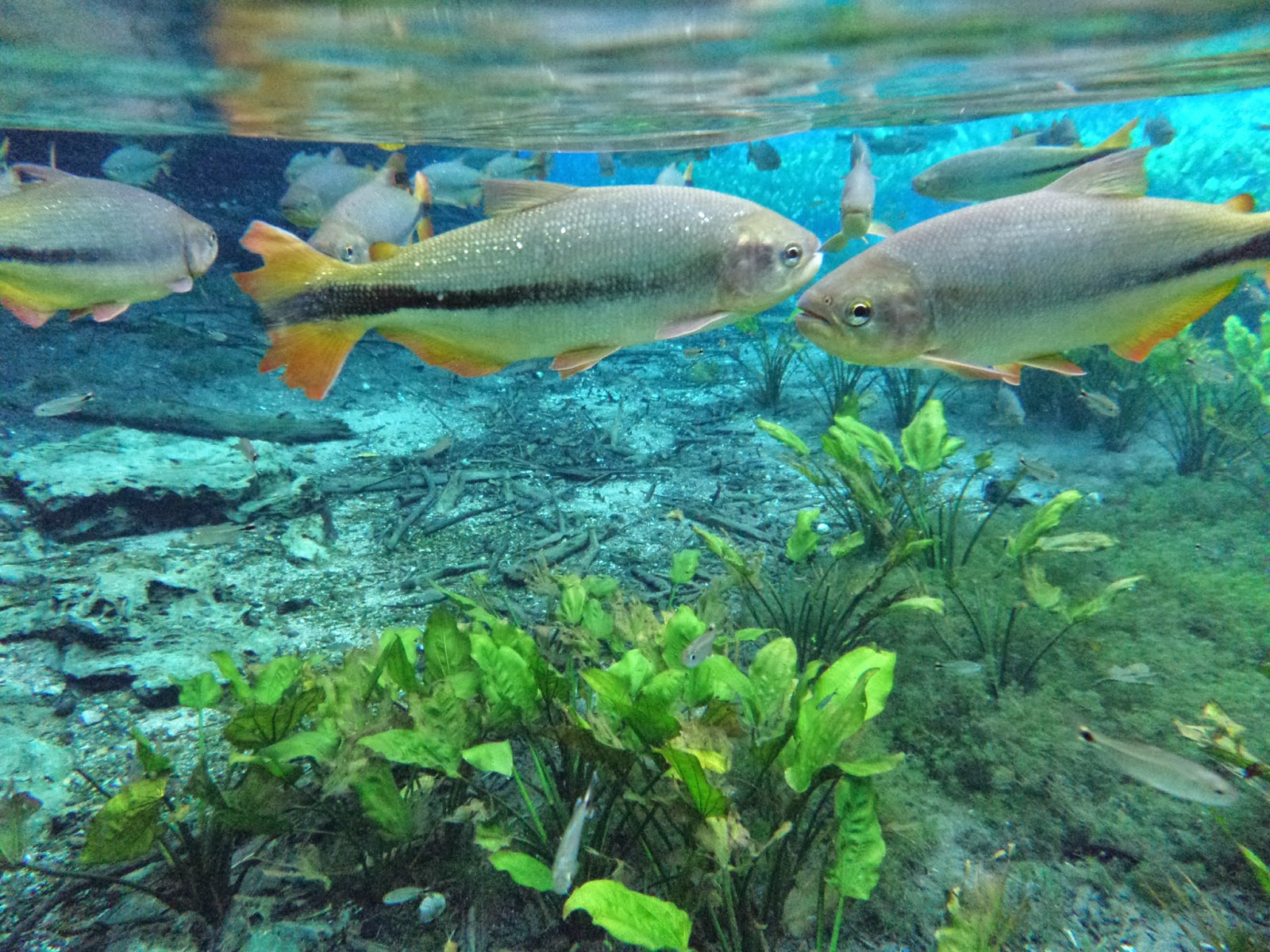 Aquário Natural - Bonito, Mato Grosso do Sul