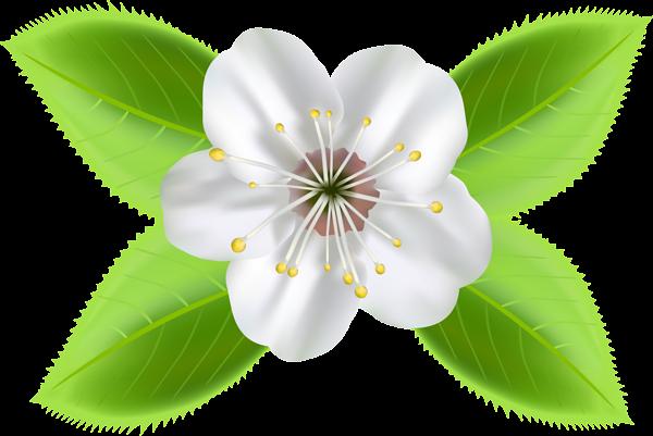 Imagenes Y Gifs Animados Imagenes De Flores En Primavera