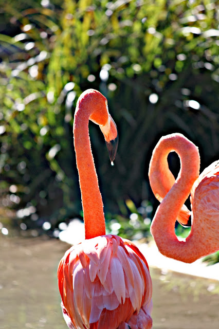 Flamingo, (C) Rosevine Cottage Girls,