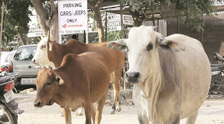 food-bank-for-cow-in-dhanbad