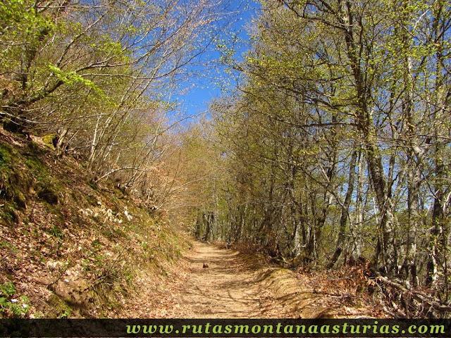 Bosque y pista en Caso