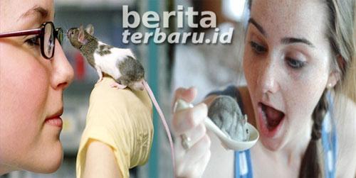 Cara Terbaru Membasmi Tikus di Rumah