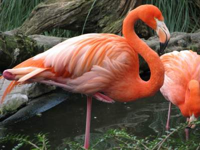 "6. The number of ""FAKE"" flamingos are far greater than the real ones"