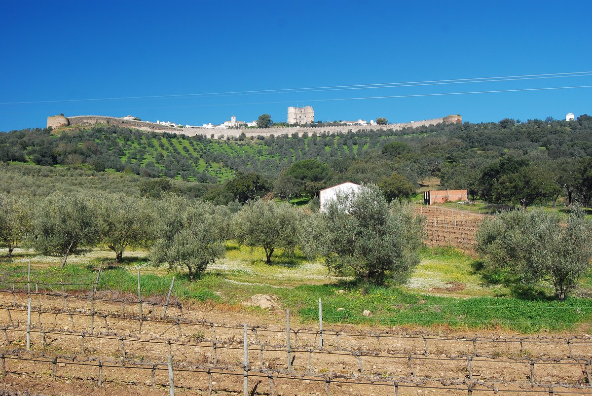vue du village depuis le bas, dominant les oliviers de l'Alentejo Evoramonte