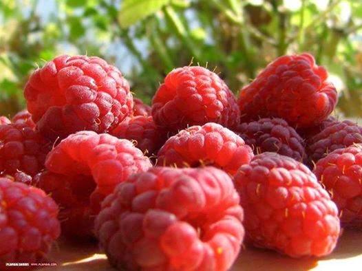 Raspberry Untuk Kesuburan Pria