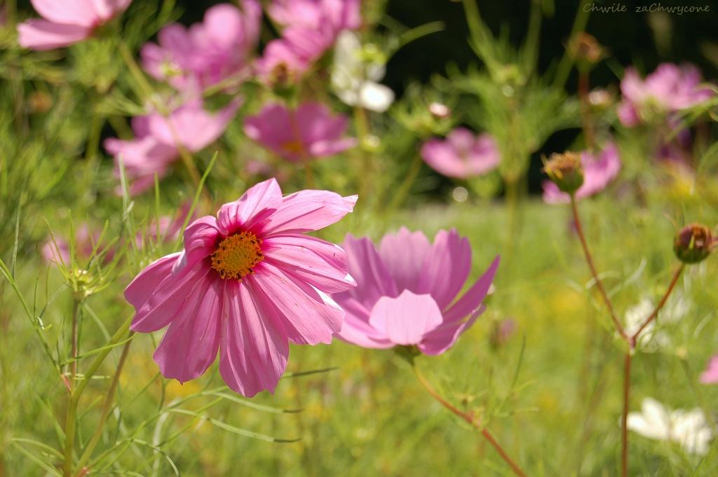 Chwile Zachwycone Rozowe Kwiaty Z Botanika