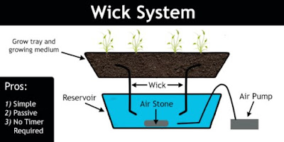 Plant Hydroponics Axis System (Wick)