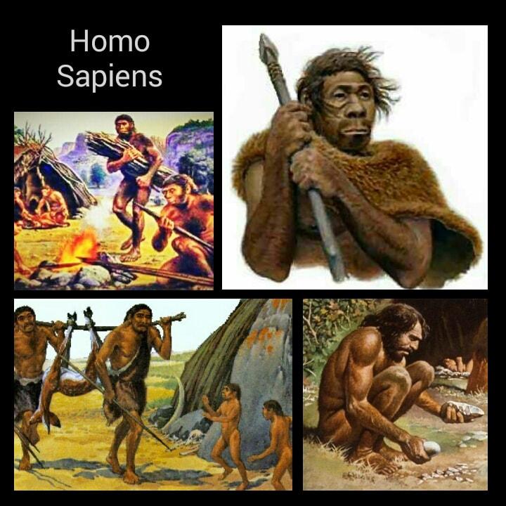 Ciri Ciri Homo Sapiens Pengertian Dan Contoh Hasil Budaya Zona