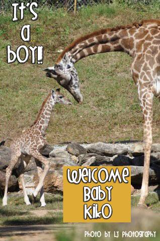 Welcome Baby Giraffe Bento - Diana Rambles - photo#26