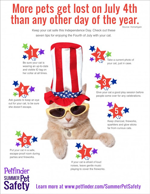 Independence Day Mewsings By The Cat