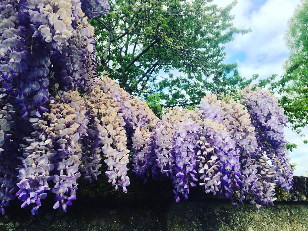 Niort en fleurs