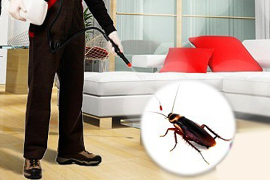 أرخص شركة مكافحة حشرات بالدمام