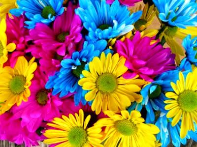 Λουλούδια της άνοιξης και του καλοκαιριού