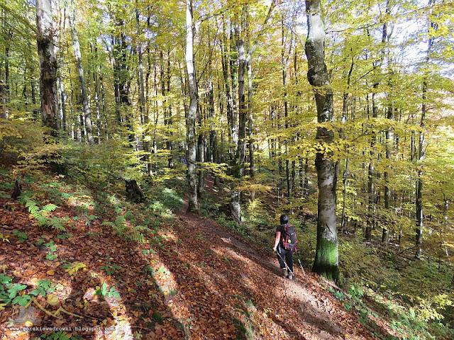 Połonina Caryńska [wwwgorskiewedrowki.blogspot.com]