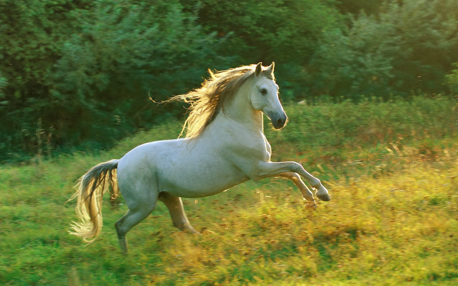White running horses - photo#41