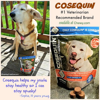Cosequin for dogs senior rescue