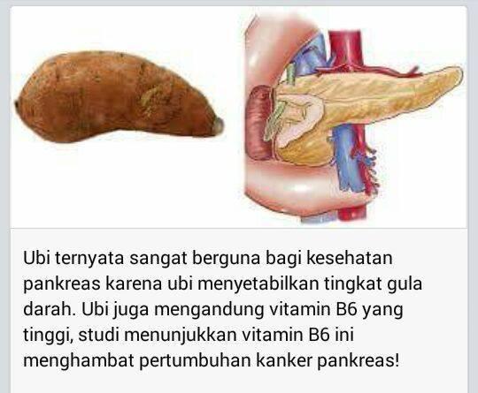 Ubi yang Menyerupai Pankreas