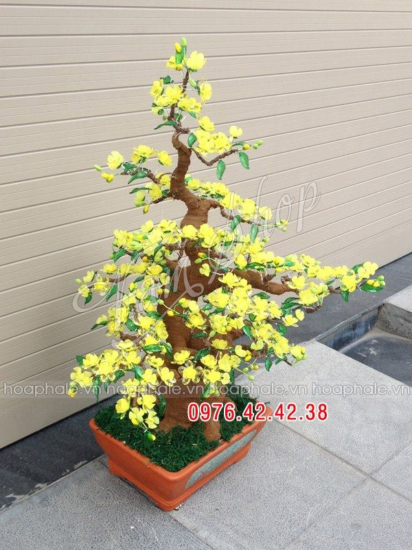 Goc bonsai mai dao tai Cong Duc
