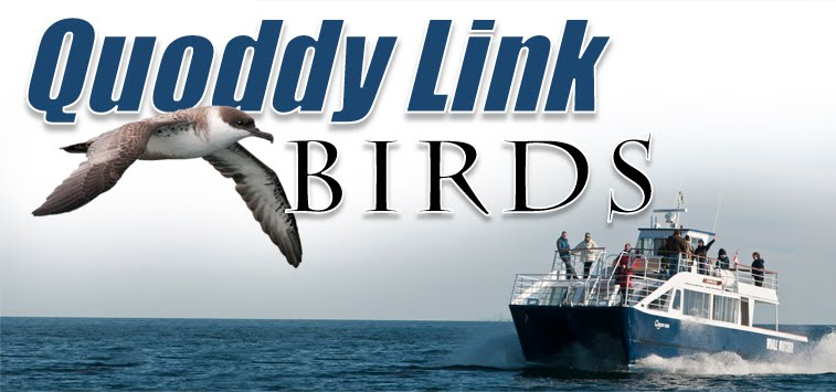 Quoddy Link Birds