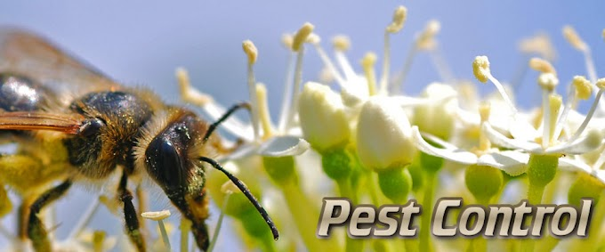 Natural Pest Control Service for your Home
