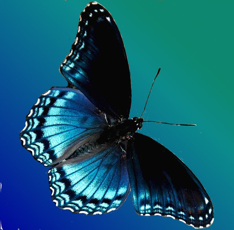 Human Heart moreover Angina Pectoris also Blue Butterfly 08 likewise Transition And Normal Newborn Care as well Health Benefits Of Cumin. on blood flow