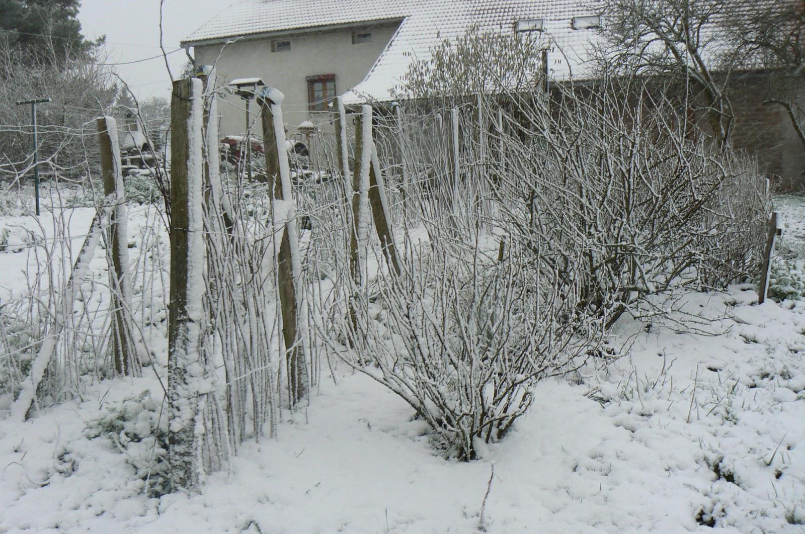 Les yeux les pieds sur ga a le jardin en hiver sous la neige for Jardin hiver plantation