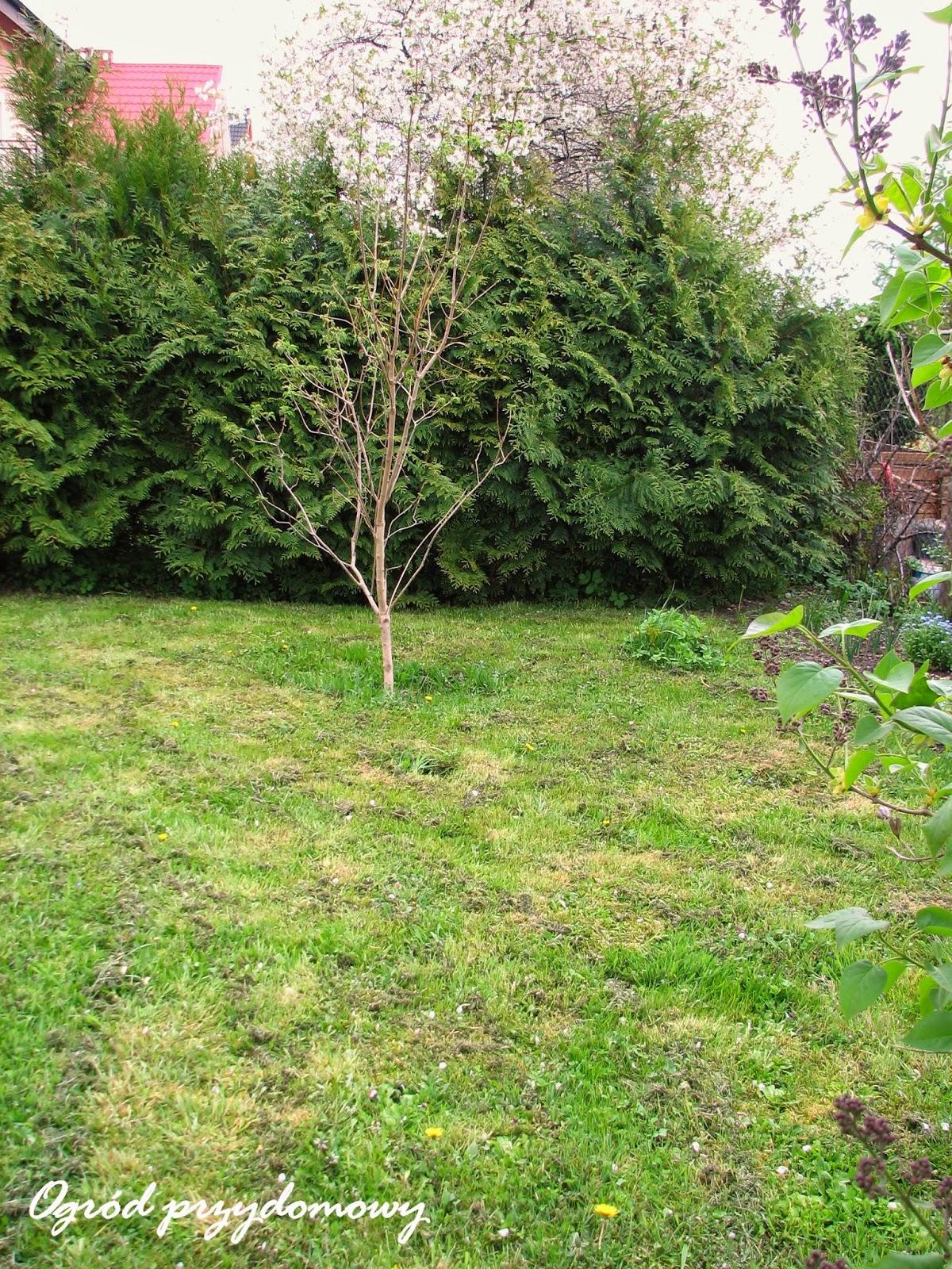 wymiana roślin, zamiana roślin, ogród przydomowy