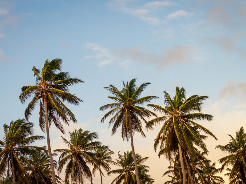 Download Beach Palm Mapepala Khoma HD wallpaper. Click Visit page Button for More Images.