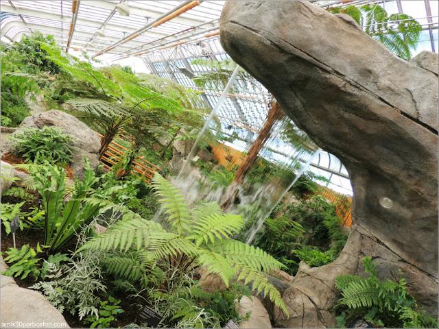 Invernadero de Helechos en el Jardín Botánico de Montreal