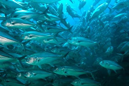 Deep Sea Fish Oil is Healthy for Humans