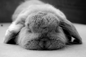 Rabbit behaviour illness