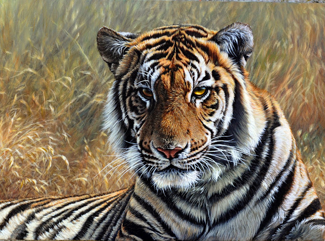 Contemplation Tiger Portrait by Alan M Hunt