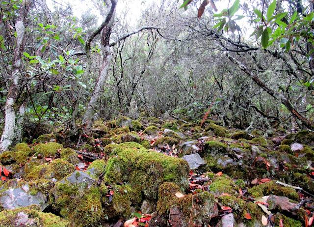 Ruta por el Parque nacional de Cabañeros